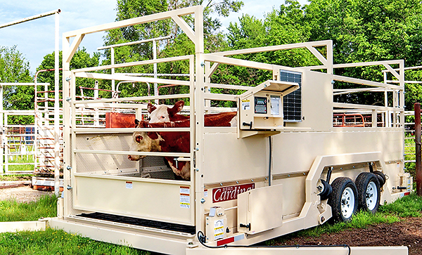 Weight Wrangler mobile livestock scales can be moved to changing locations and come with single or tandem axles for hauling behind a 3/4 ton truck.