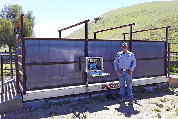The model LSE1020 livestock scale shown here in California has a 20' x 10' concrete deck with 10-ton capacity and accommodates cattle pens on top. The customer is using a Cardinal Scale 212GX indicator for their readout.